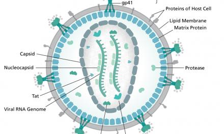 Hvat er virus? (III) Human immunodeficiency virus (eyðkvæmisvirus)- HIV